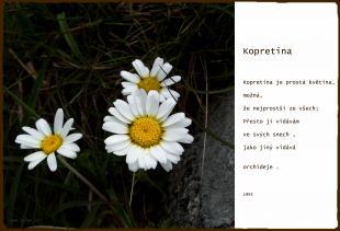Kopretina